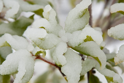 Snow-2309