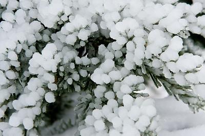 Snow-2313