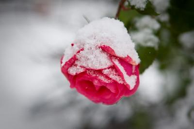 Snow-2265