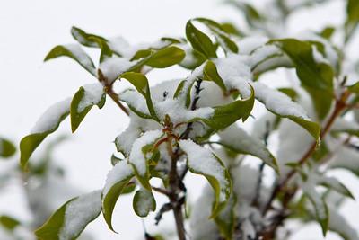 Snow-2270