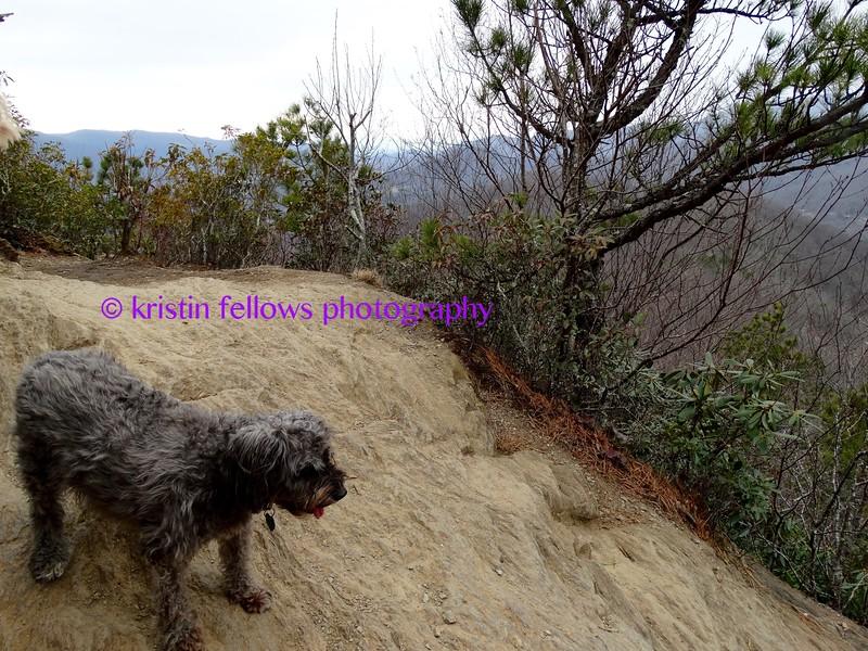 fierce mountain dog