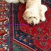 stalking the carpet...