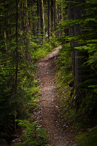 Singing pass trail heading into the Garabaldi Provincial Park, Canada