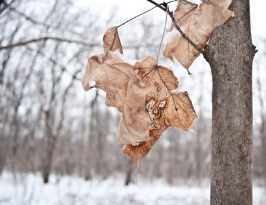 Fall Leaves in Winter