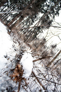 Fallen Tree Covered in Snow