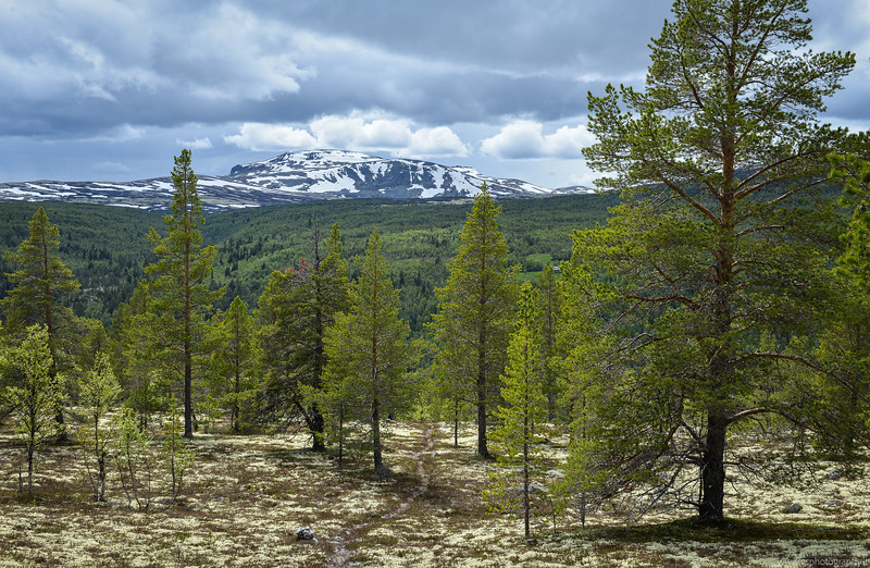 Another spring photo in Rondane National Park