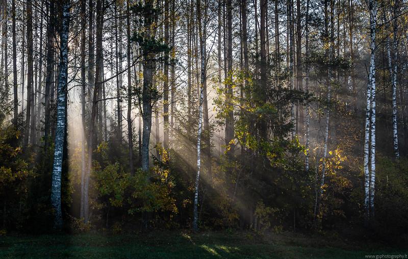 Sunny Foggy Autumn Morning