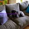 bandit on the couch