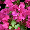 hilton gardens 8