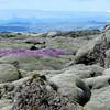lichen covered lava