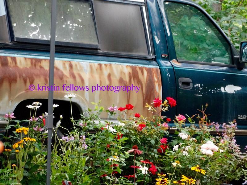 flowers & rust