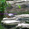 zilker turtle