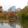 autum in new york