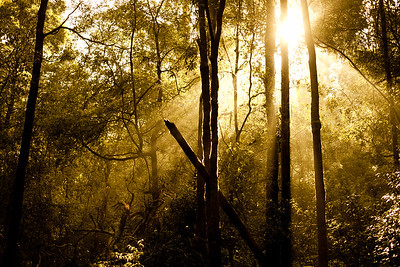 Early morning light in Mt Field national park