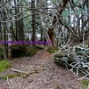 the magical woods on top of mount celo