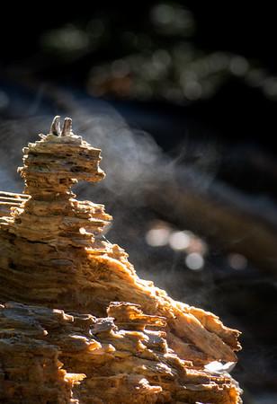 Wooden Seahorse