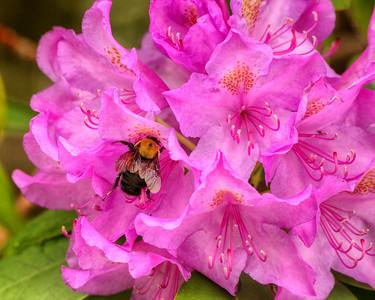 Keeping 'Bee'sy
