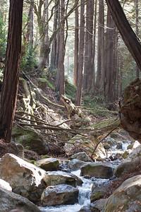 Stream @ Limekiln State Park