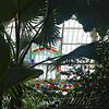 Window in the Jungle