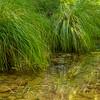 This is Alameda Creek in the Sunol Regional Wilderness area.