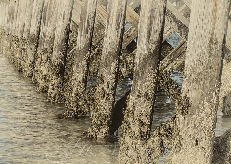 Pier Timbers at Low Tide