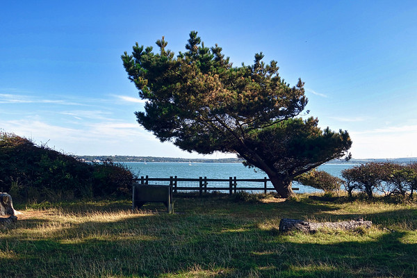 The Solent from Lepe Country Park