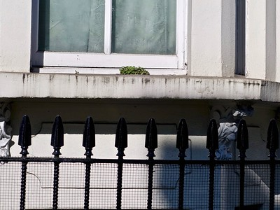 Window sill with weeds