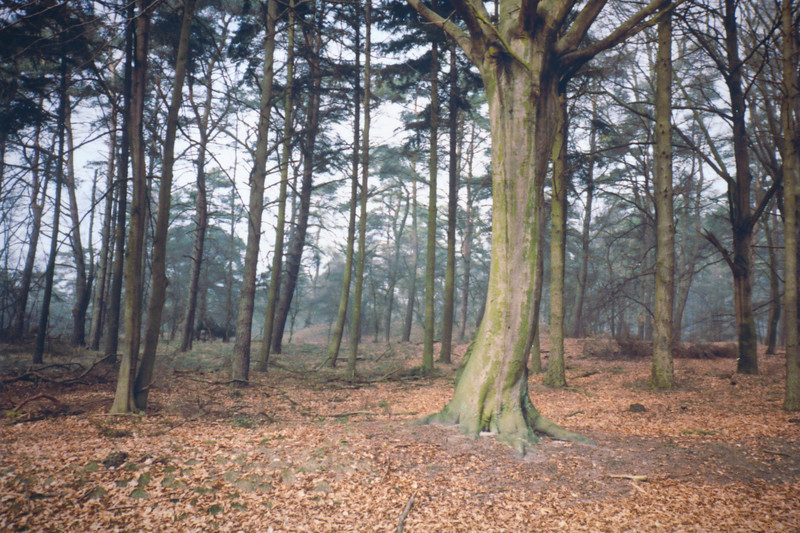 A forest in the Netherlands, Spring 1985