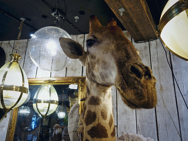 A giraffe in an antique shop