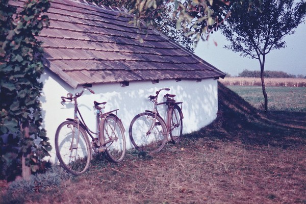 My grandparent's bicycles in the vineyard