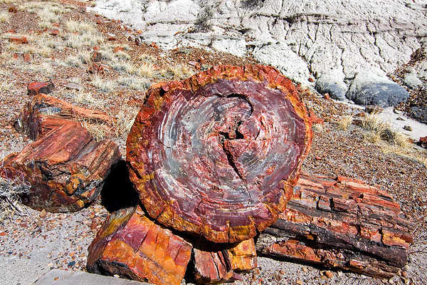 Petrified remnants of a once magnificent pine forest have taken millions of years to resurface at Petrified Forest National Park in Arizona.