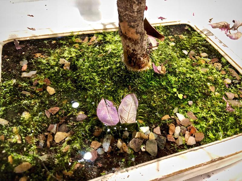 Bonsai moss garden