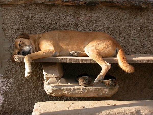 Pushkar, Rajasthan
