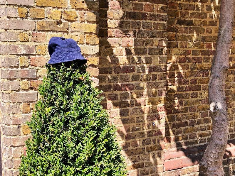Hat on a bush