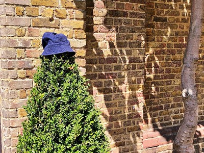 Hat on a bush