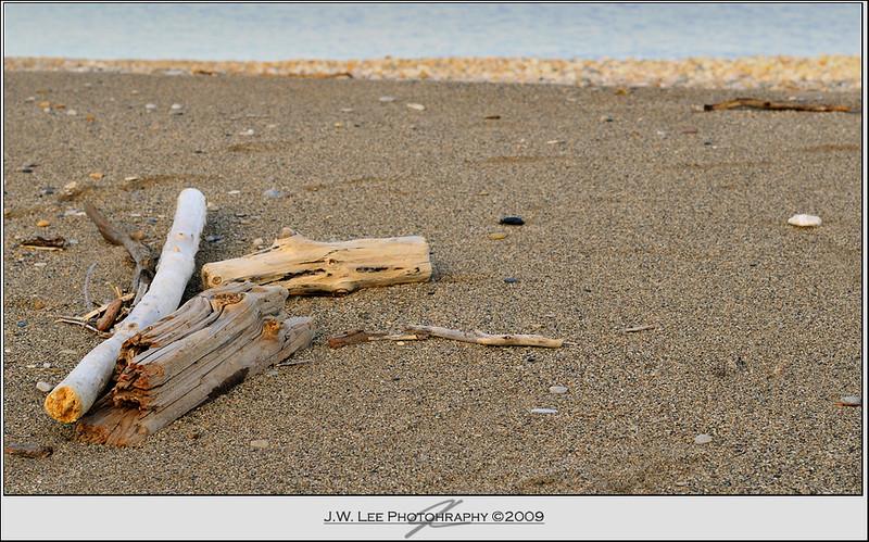 Drifters <br /> driftwood, beach, sand, nikon, d300