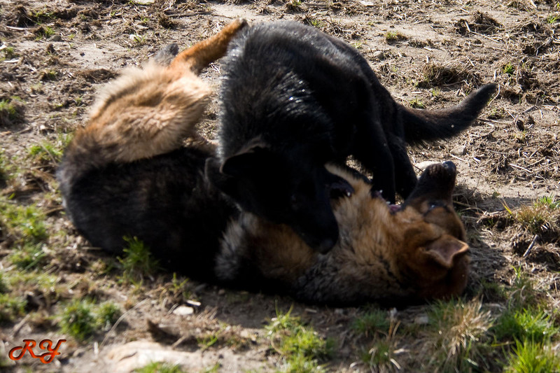 Tough Love - Mud Wrestling