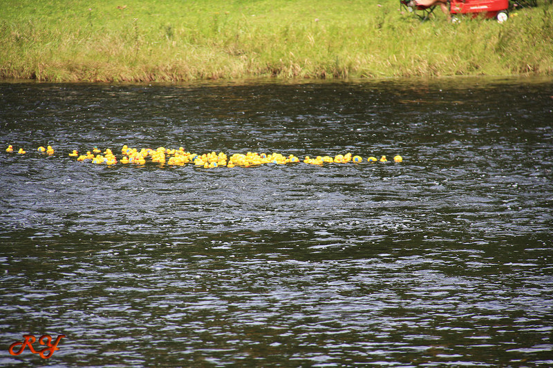 Bald Mountain Campground; Duck race - here they go!