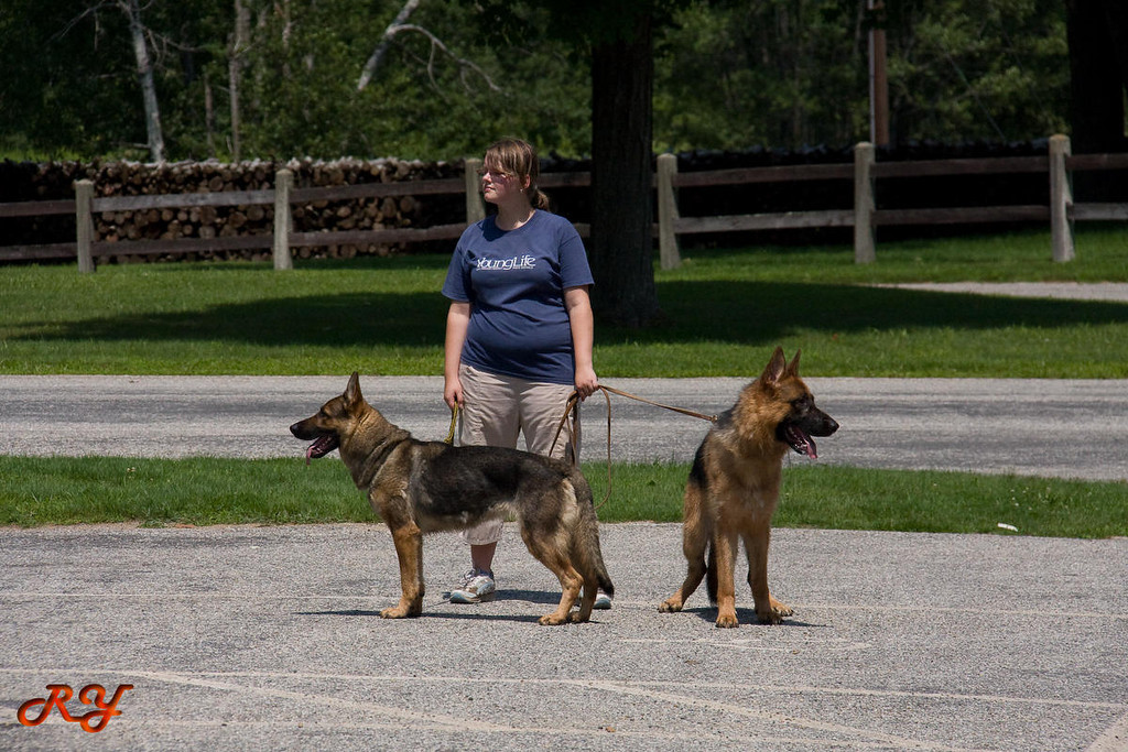 Can the small girl handle those two big dogs?