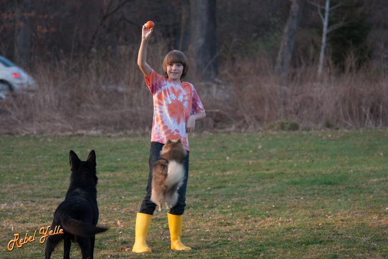 Tania can jump higher than a German Shepherd.