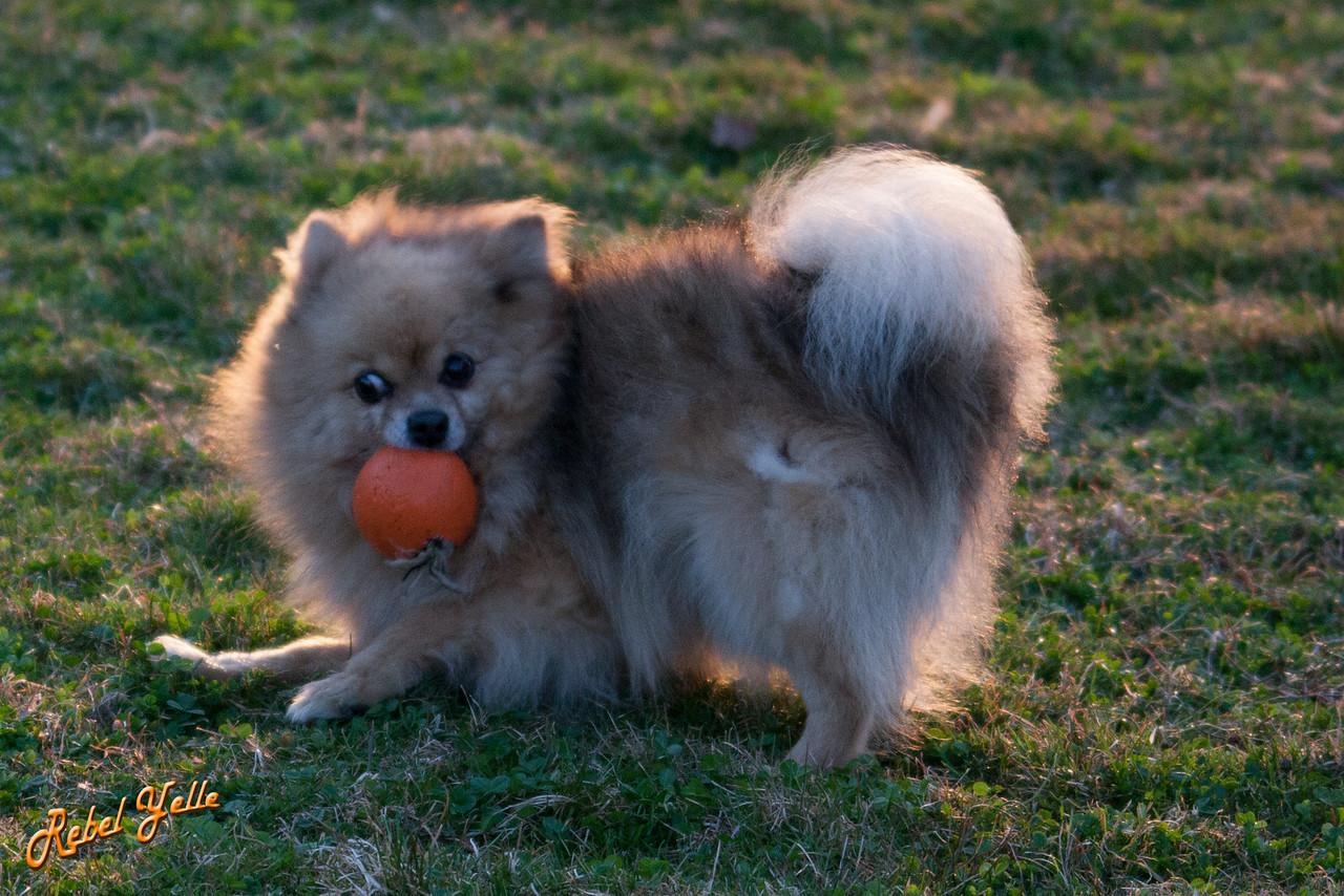 She got a ball!
