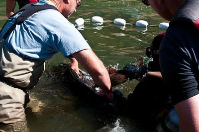 Phillips River 2011-98
