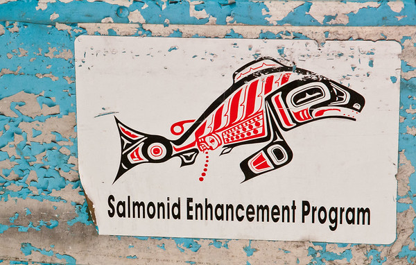 Phillips River Salmon Enhancement Project