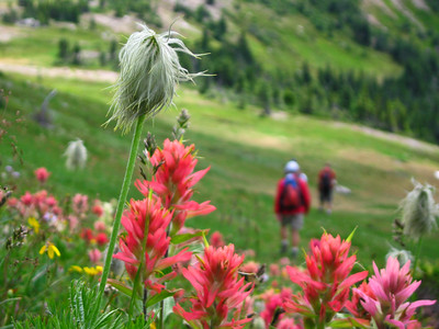 Flowers_in_Bugaboo_Pass_072706_Marc_Piche