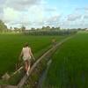 A rice field | SEMINYAK