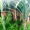Inside the rice field | SEMINYAK