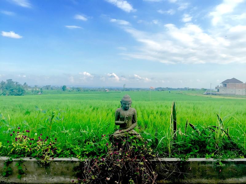 A rice field near Canggu   BALI