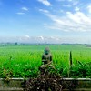 A rice field near Canggu | BALI