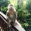 Monkey Forest | UBUD