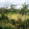 Tegalaland Rice Terrace | UBUD